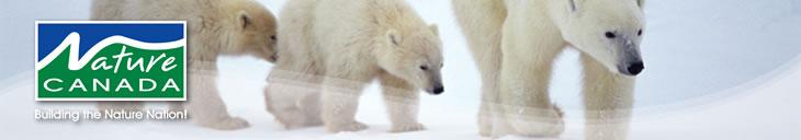 polar_bears_banner
